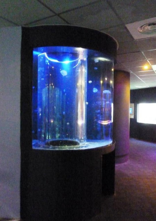 Aquariums et terrariums for Grand aquarium rond