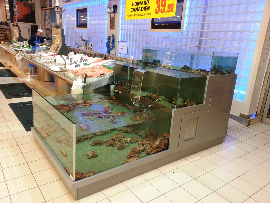 2 Vivier Aquarium Presentation Double Rservoir Cascade Proviviers